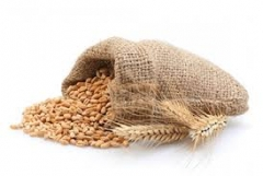 Пшениця сорту Нива Одеська
