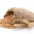 Пшениця Мудрість Одеська